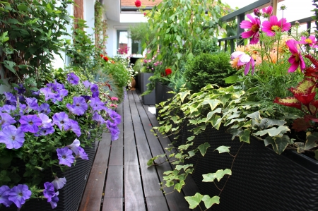 Modern real estate � house terrace with a lot of flowers