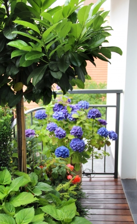 Modern real estate – house terrace with a lot of flowers