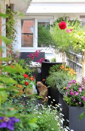 現代の不動産-たくさんの花と家テラス