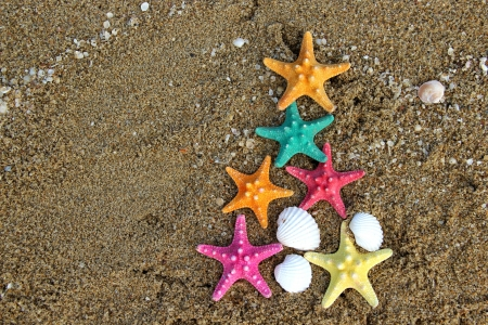 starfish: Christmas and New Year on the beach in creative style
