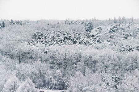 snowdrifts: Beautiful winter with a lot of snow and snowdrifts in the forest Stock Photo