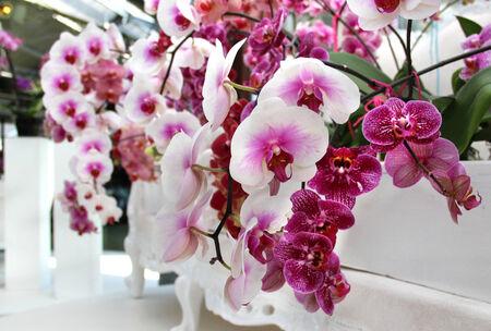 Big mix of beautiful amazing orchids