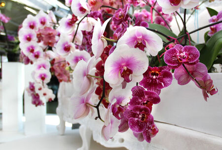 orchid house: Big mix of beautiful amazing orchids