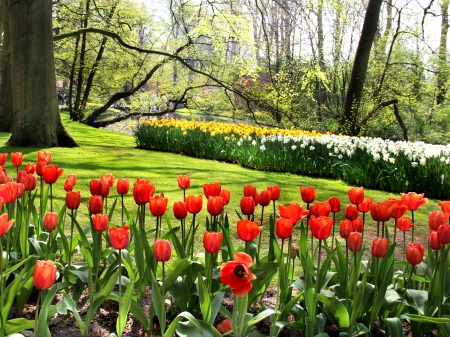 Beautiful park in spring with pond, trees and flowers  photo