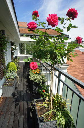 Beautiful modern real estate terrace with a lot of flowers  photo