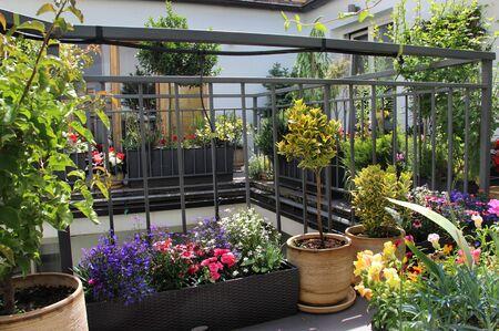 Beautiful modern terrace with seasonal summer flowers