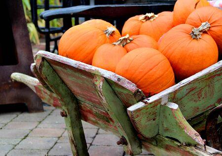 Big mix of Halloween pumpkins in the fall garden