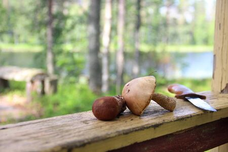 mushroom picking: Mushroom picking in the Finnish forest, Finland