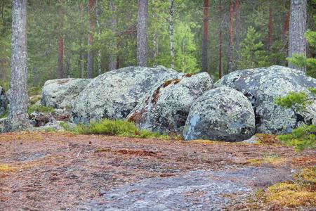 karelia: Beautiful forests of Finland, North Karelia Stock Photo