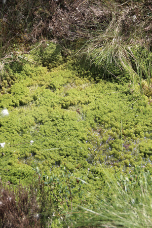 karelia: Beautiful moss in the Finnish forests, Finland, North Karelia Stock Photo