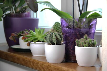 Mix of beautiful houseplants and cactuses