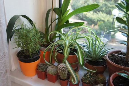 Beautiful mix of houseplants on the window