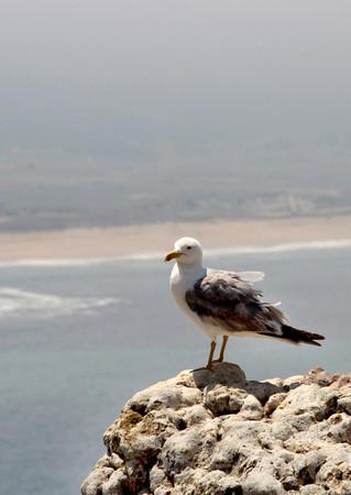 Beautiful view of Nazare and Atlantic ocean, Portugal
