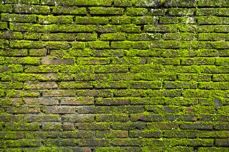 Grunge old brick wall with moss texture for background