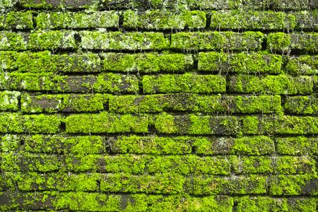 Moss on old brick wall Stock Photo