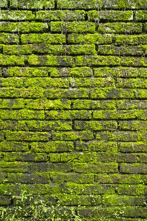Moss wall Stock Photo