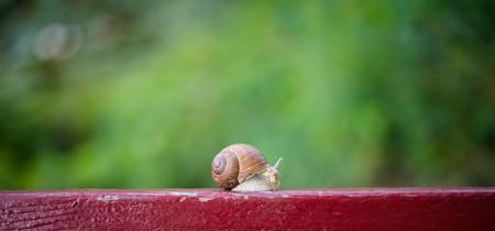 Snail on the edge of the bench. Alexandria park, Bila Tserkva Foto de archivo