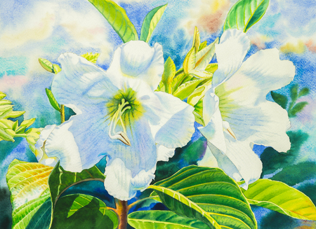 heralds: Watercolor painting realistic flowers white color of heralds trumpet flower and green leaves