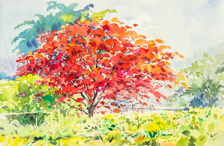 watercolor landscape painting red, orange color of  peacock  flowers tree