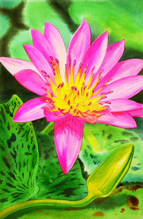 Watercolor painting original realistic pink color of lotus flower watercolor painting original realistic pink color of lotus flower stock photo picture and royalty free image image 70163992 mightylinksfo