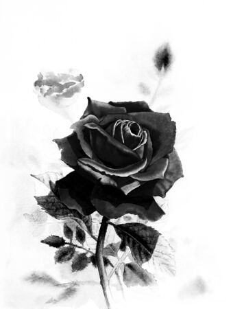 winter garden: Watercolor original realistic painting black color of rose flower and  emotion in white background