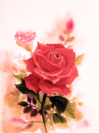 winter garden: Watercolor original realistic painting red color of rose flower and  emotion in white background Stock Photo