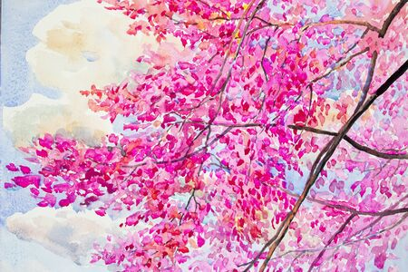 beautyful: Painting  landscape watercolor original  colorful of wild  himalayan cherry with beautyful  blue sky and cloud background Stock Photo