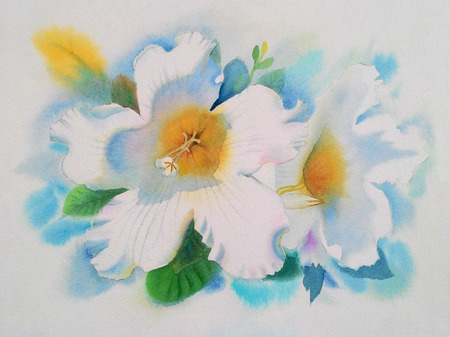 Watercolor painting original realistic white flower of Herald trumpet and green leaves in white background. Original painting. Stock Photo