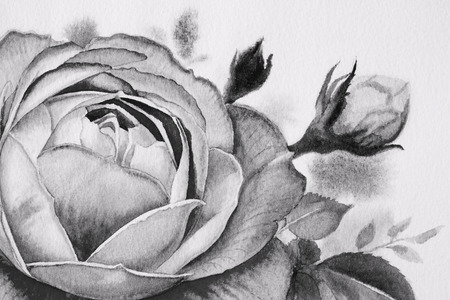 Black and white rose flower. Watercolor paintings of roses and  leaves in spring on paper white background. Classic painting with invitation, Valentine card, vintage style. Stok Fotoğraf