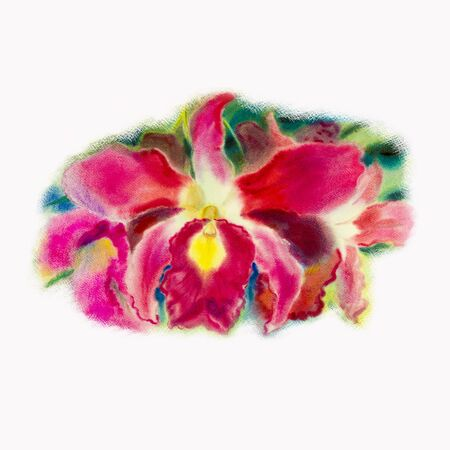 Painting art watercolor pink color of orchid flower with postcard,congratulation in white background