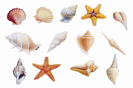 Hand drawn shellfish and starfish on white background, Watercolor original painting colorful fossil underwater life objects, Illustration art drawing isolated for printing and romantic postcard style.