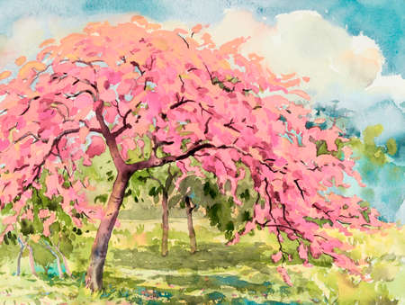 Paintings flowers- Watercolor landscape of cherry blossom and meadow. Hand painted illustration on paper sky background. Beautiful nature spring summery season  Eco-friendly