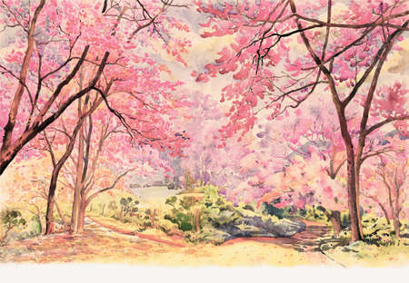 Painting watercolor landscape pink red color of Wild himalayan  cherry roadside in the morning with vintage emotion sky cloud background, Hand painted, beauty nature winter season in Thailand. 写真素材
