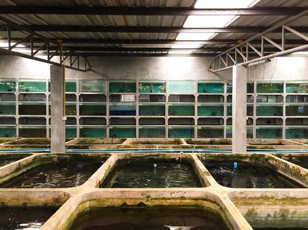 ponds and fish tanks.
