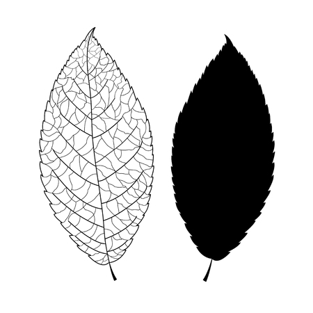 black graphic silhouette of a tree leaf and leaf on white background Stock Vector - 24182109