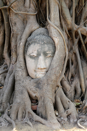 Buddha head in the tree roots photo