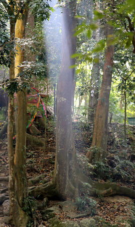 beautiful trees and a ray of light in the jungle photo