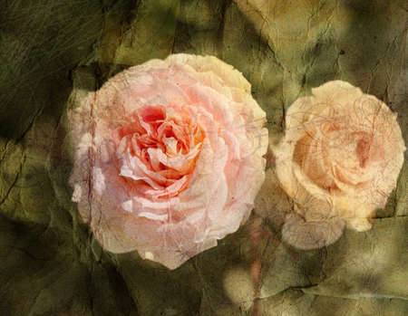 coating: beautiful vintage retro rose on watercolor background