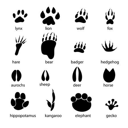 흰색 배경에 동물 발자국의 그래픽 세트