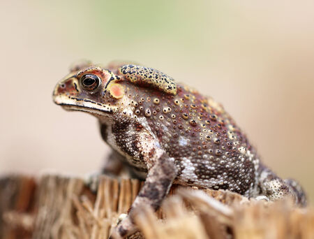 frog egg: photo portrait of an exotic tropical frogs Stock Photo