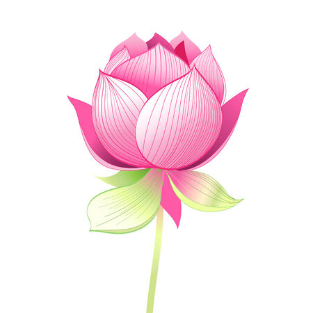 bright graphics beautiful lotus flower on a white background