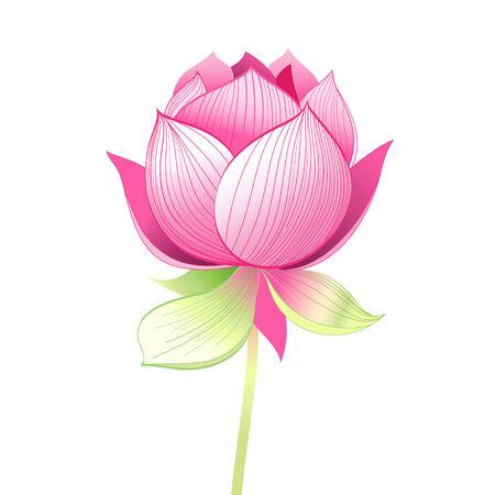 Helle Grafiken schöne Lotosblume auf weißem Hintergrund Standard-Bild - 35179001