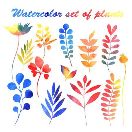 probation: Beautiful bright watercolor set of plants. Vector illustration