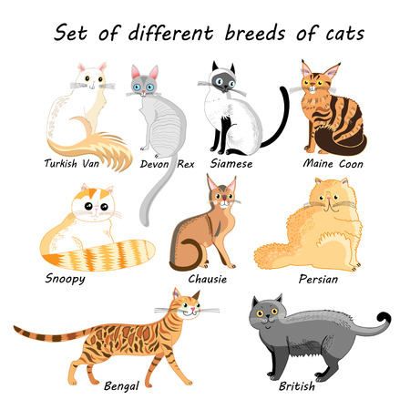 Graphic set of different breeds of cats on a white background Illustration