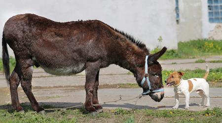 Helder beeld amusante ezel en hond zonnige dag Stockfoto - 40344171
