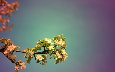 affiliates: bright picture of blossoming apple tree sunny day