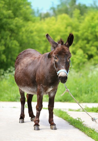 Beautiful portrait of a donkey photographed close up Stock Photo