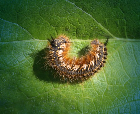 緑の葉にかかっている大きな美しい虫