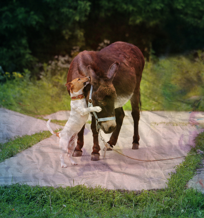 Beautiful portrait of a donkey photographed close up photo