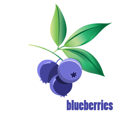 blueberries: illustration of blueberries on a white background